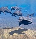 Plus! Dolphins