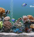 Plus Aquarium