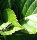 summerfrog 1680x1050