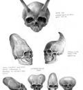skulls strange all