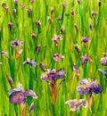 Alaskan Iris