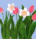 Tulip Smiles