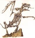 L dracoliche