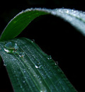 Dew Droplets by Callu