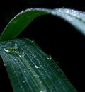 Dew Droplets by Callu