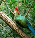 exotic bird by entartet