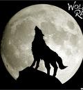wolfsrain 4