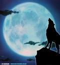 wolfsrain 9