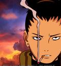 Sika Smoking