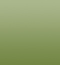 Simple XP(Olive)